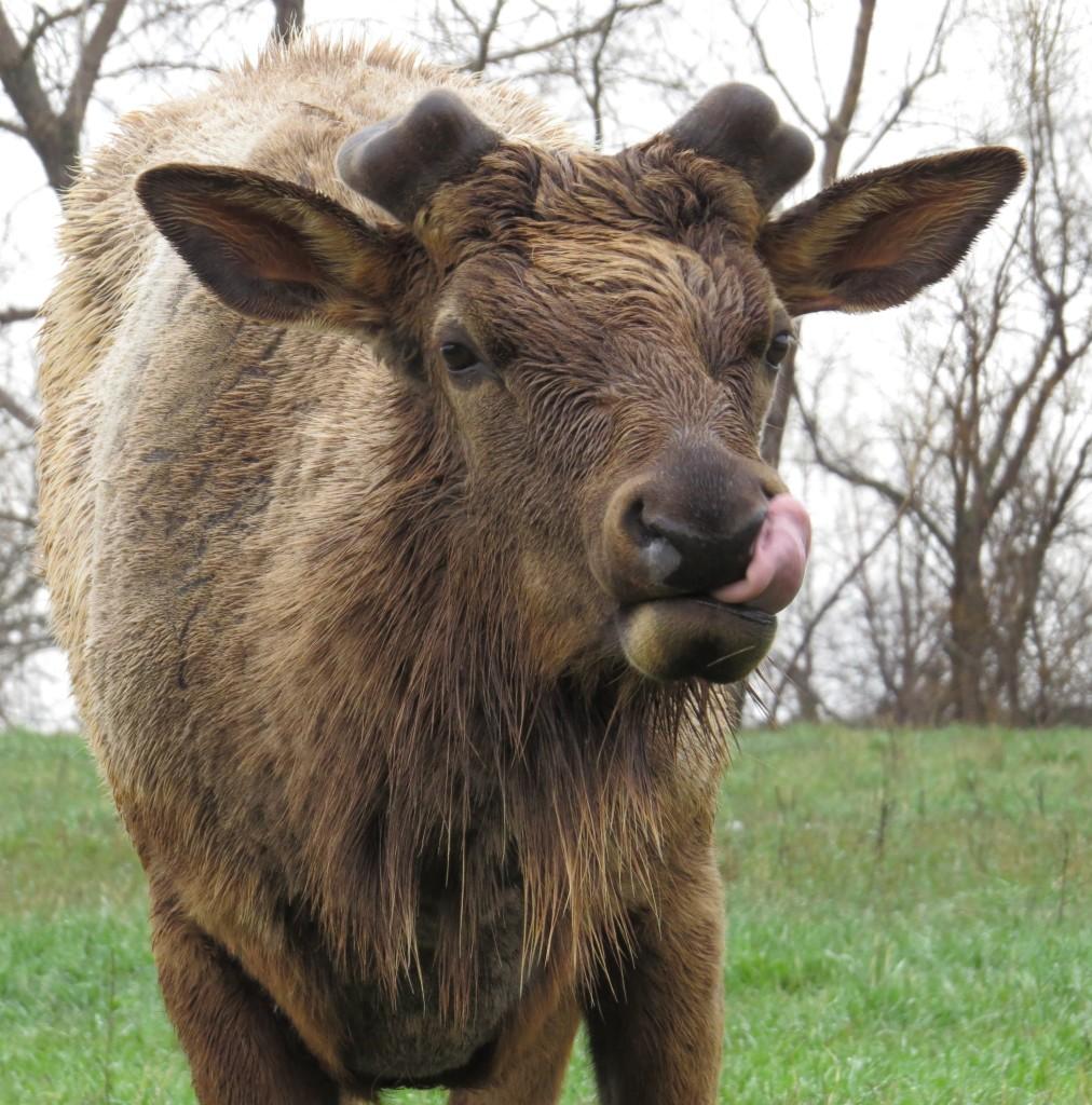 Omaha Wildlife Safari Park