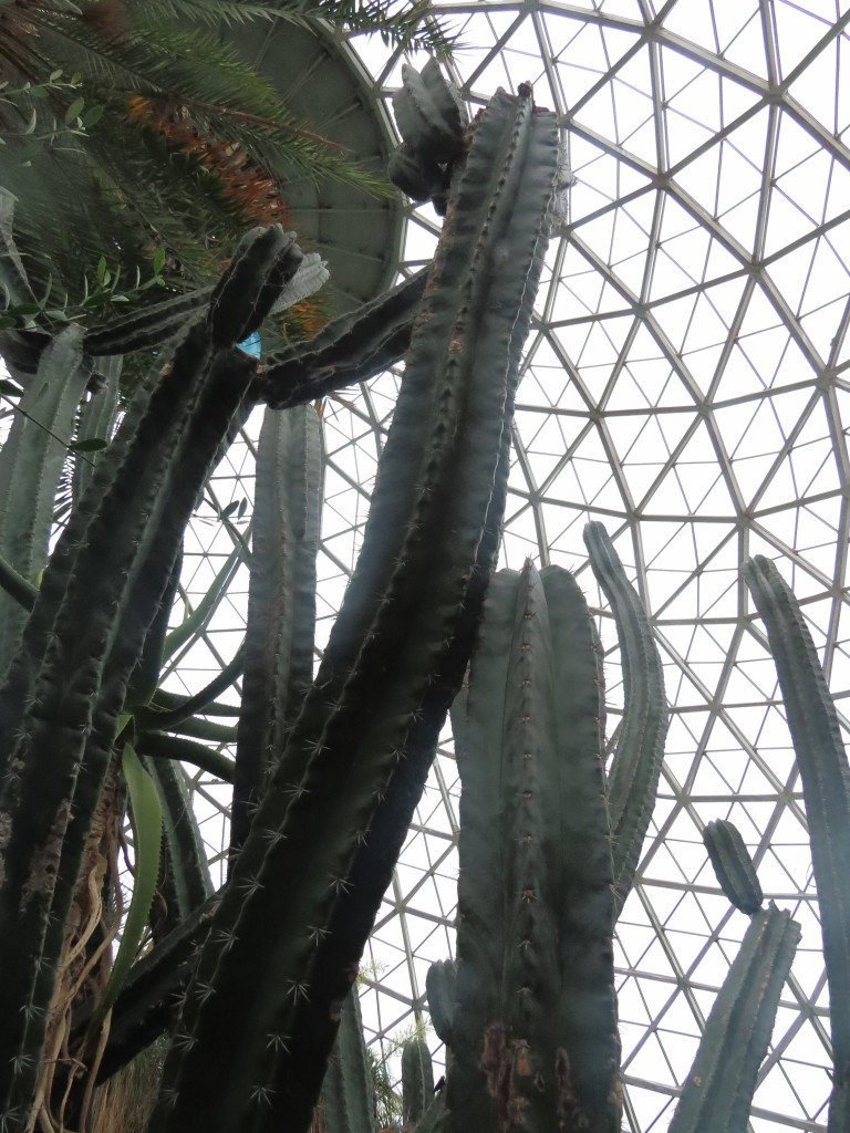 Cactus at Mitchell Domes in Milwaukee