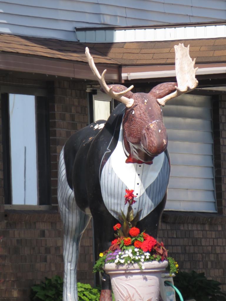 Moose dressed up in a tuxedo in Upper Michigan