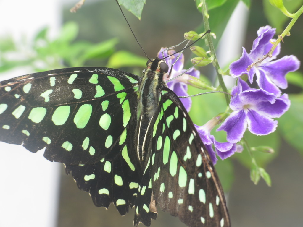 Butterfly Conservatory on Mackinac Island