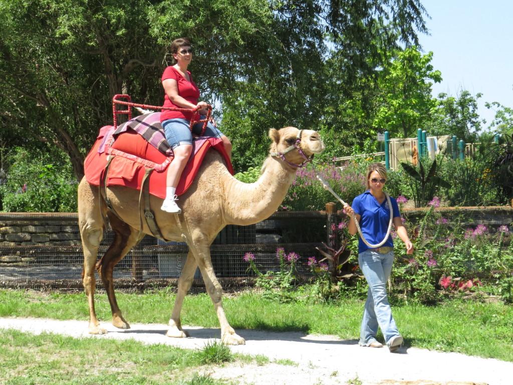 Camel ride at Kansas City Zoo