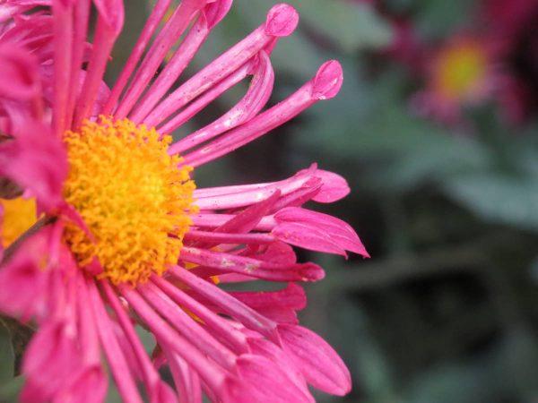 Beautiful flowers in bloom at Lauritzen Gardens in Omaha