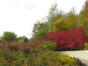 Lauritzen Gardens 9