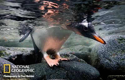 penguin-on-rocks