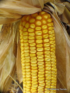 Harvest season: Checking out North Iowa's agriculture industry