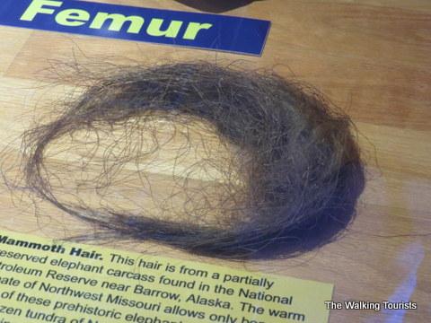 Mammoth Hair at Remington Nature Center