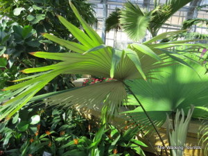 Omaha's Lauritzen Gardens expands with new Conservatory attraction