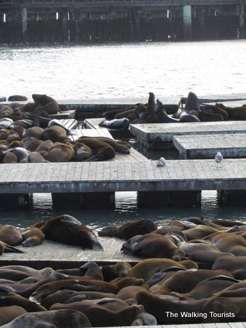 Sea Lions on the Pier in San Francisco