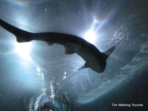 Aquarium at the Bay in San Francisco