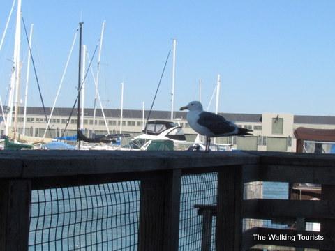 Sea Gulls at the docks in San Francisco