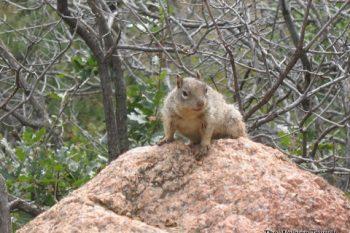 Zoo and Colorado 043