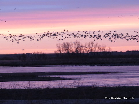 Early morning crane viewing on the Platte near Grand Island, NE