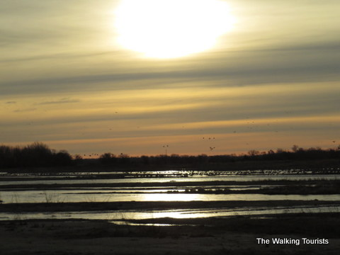Sandhill Cranes wake up from their evening on the Platte