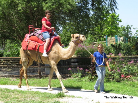 Camel rides at Kansas City Zoo