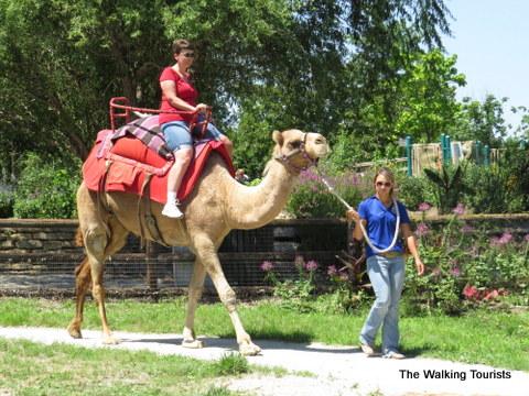 Camel rides at Kansas City Zoo