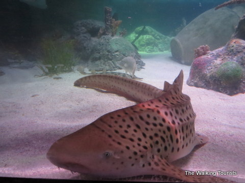 Stingray tank at SeaLife in Kansas City
