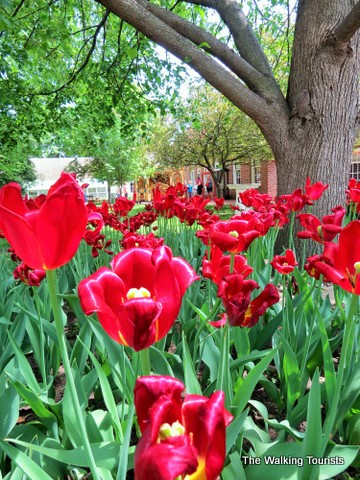Wyatt Earp, tulip festival combine for fantastic day trip to Pella, Iowa