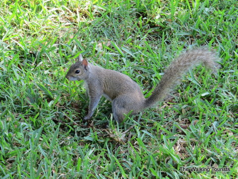 Another squirrel on the INFOCUS photo tour