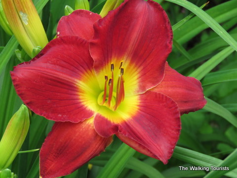 Powell Gardens offer beautiful views in Kansas City