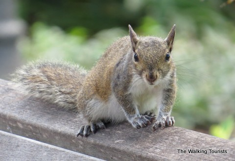 squirrels are just one of our furry friends