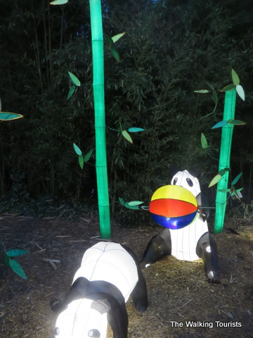 Panda Bears playing along the trail at Missouri Botanical Gardens