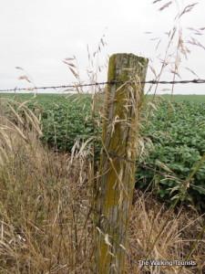 Harvest season: 'Expedition Yetter' shares Iowa farming story