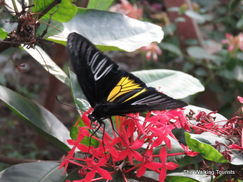 Variety, flitting make for fun visit to Sioux Falls Butterfly House