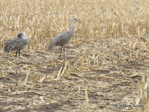 Annual Sandhill crane viewing trip adds more central Nebraska sightseeing