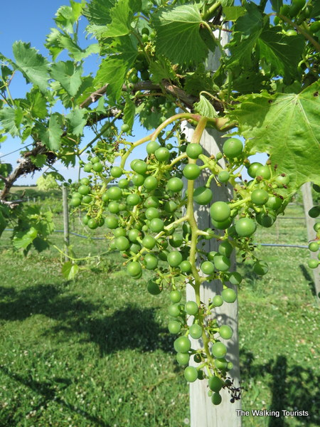 Nebraska Wine Tours