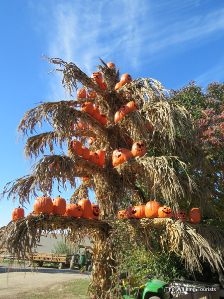 Pumpkin Patch Hope Island