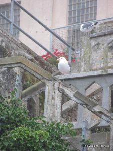 'The Rock' – Visiting Alcatraz Island