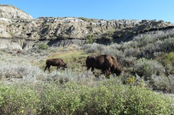 Find your 'Legendary' in North Dakota – #MWTravel Chat May 3rd 2017