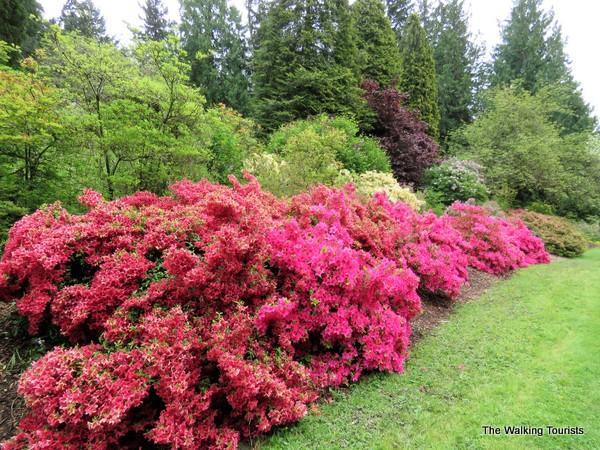 University of Washington Arboretum in Seattle
