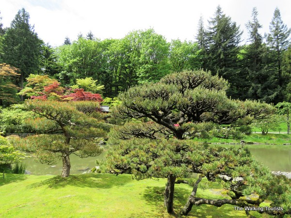 Combining native trees and plants with Japanese counterparts, Juki Iida created a majestic view.