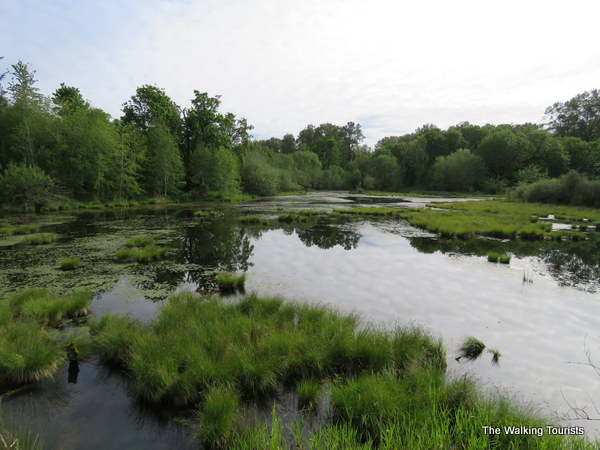 A view of a pond at Nisqually