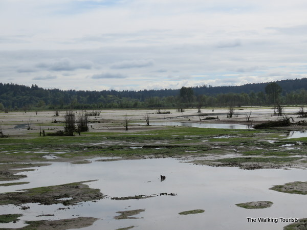 The Niqually estuary mud flats.