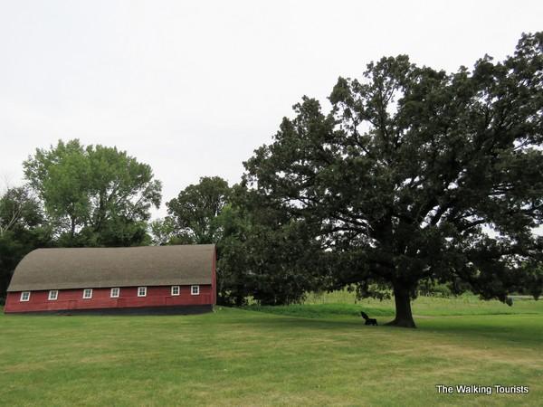 Morgan Creek winery oak tree