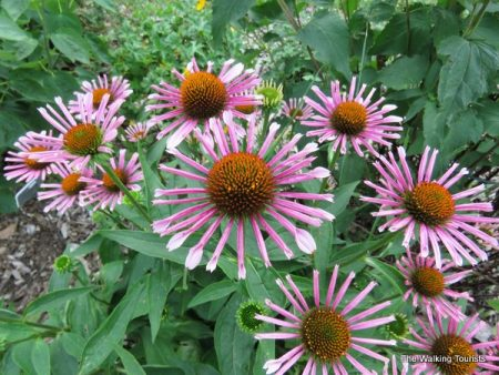 Beautiful flowers, plants and hidden gnomes highlight visit to Waterloo botanical garden