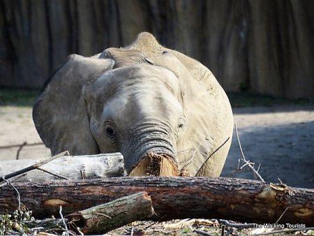Elephants top visit to Omaha zoo's African Grasslands