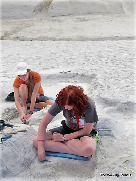 Interns working on fossil finds.