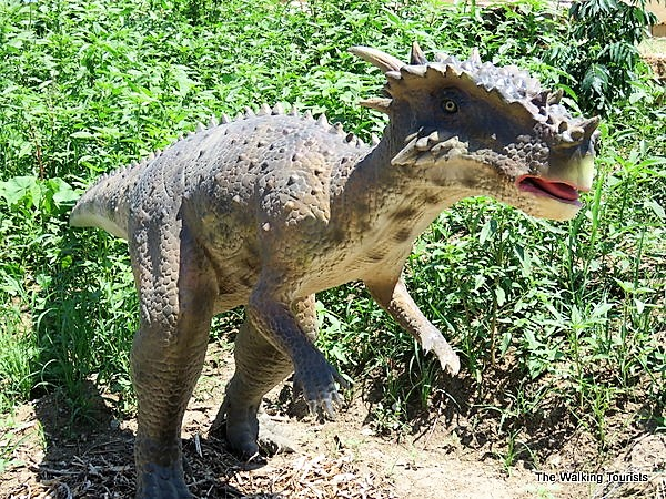 The Dracorex Hogwartsia is named after the Harry Potter movies.