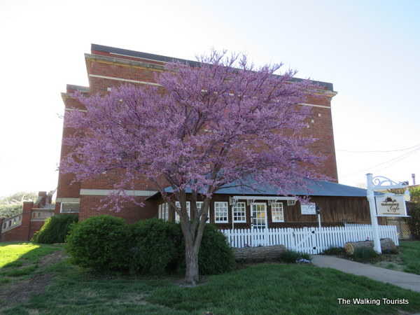 A tree with purple leaves in front of a brick schoolhouse