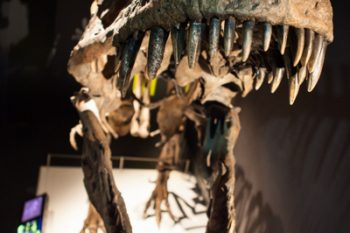 Scienceworks_Tyrannosaurs_Meet-the_Family_2015_credit_Mark_Gambino-5928